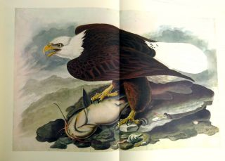 The Original Water-Color Paintings By John James Audubon For The Birds Of America; Reproduced in Color from the Collection at The New York Historical Society
